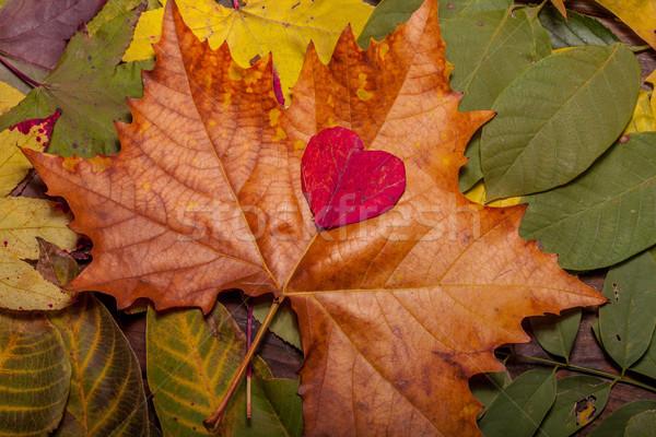 őszi levelek öreg fából készült klasszikus ősz levelek Stock fotó © IvicaNS