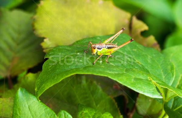 Colorido macro brilhante sessão grama natureza Foto stock © IvicaNS