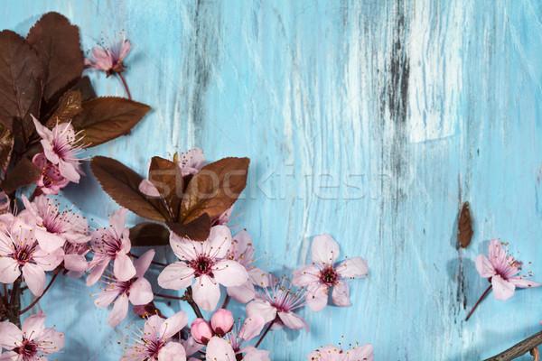 Tavasz cseresznyevirágzás cseresznyevirág kék rusztikus fából készült Stock fotó © IvicaNS