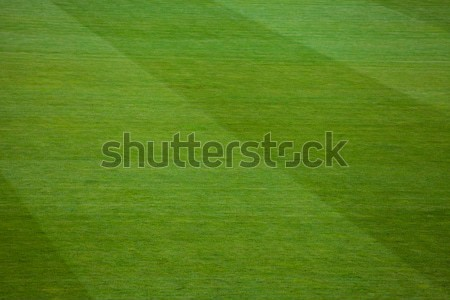 Gestreept patroon grasachtig voetbalveld trillend Stockfoto © IvicaNS