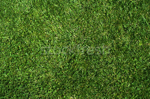 Green grass texture Stock photo © IvicaNS