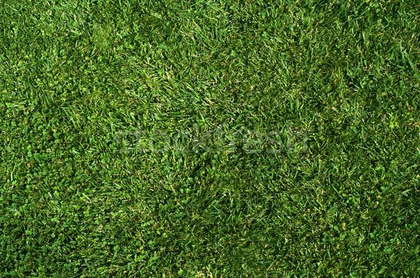 Zöld fű textúra közelkép kép friss tavasz Stock fotó © IvicaNS