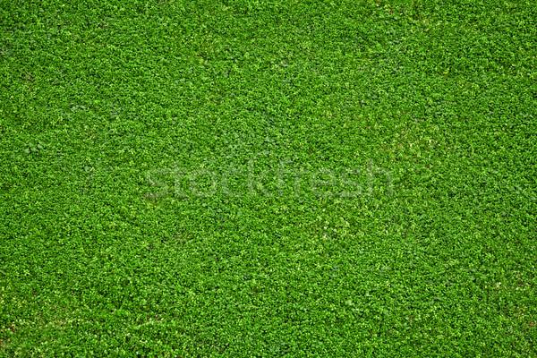 Naturalismo grama verde imagem fresco primavera Foto stock © IvicaNS