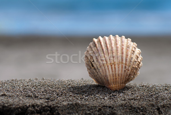 Sea shell Stock photo © IvicaNS