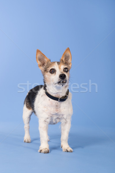 Oude glaucoma Blauw senior permanente blinde Stockfoto © ivonnewierink