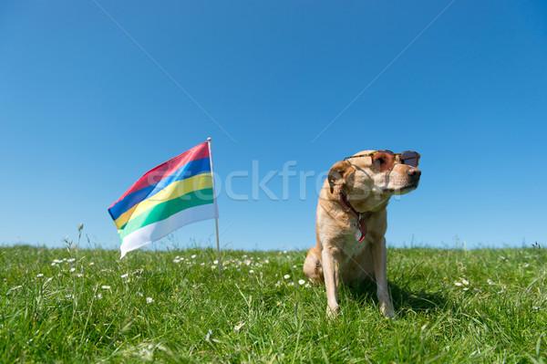 Dog laying in grass on Dutch island Stock photo © ivonnewierink