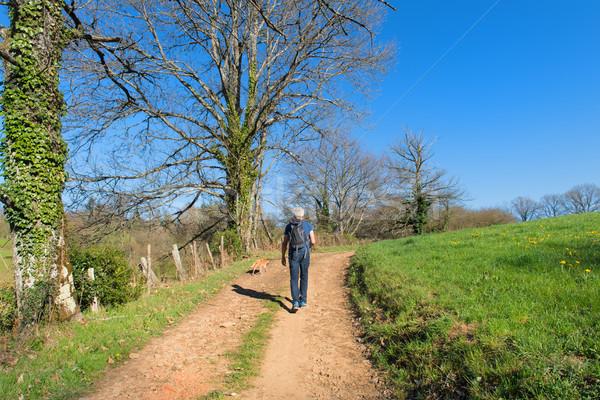 Walking in nature Stock photo © ivonnewierink