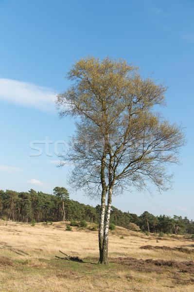 Spring in nature landscape Stock photo © ivonnewierink