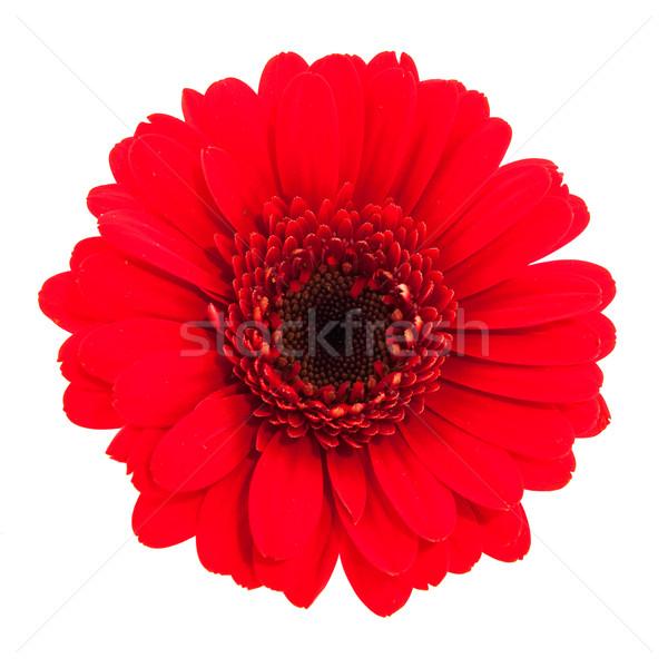 Compleet geïsoleerd Rood natuur Stockfoto © ivonnewierink