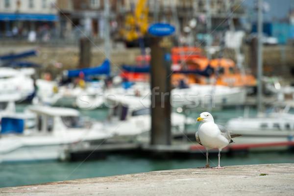 Mewa port miasta krajobraz w. łodzi Zdjęcia stock © ivonnewierink