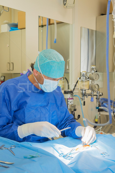 Cerrahi hayvanlar veteriner hayvan oda adam Stok fotoğraf © ivonnewierink