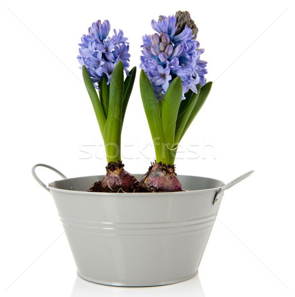 Foto stock: Azul · cinza · balde · isolado · branco
