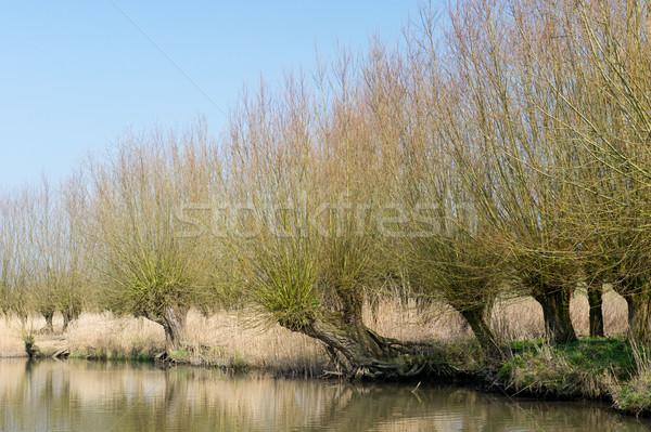 типичный Голландии голландский пейзаж деревья банка Сток-фото © ivonnewierink