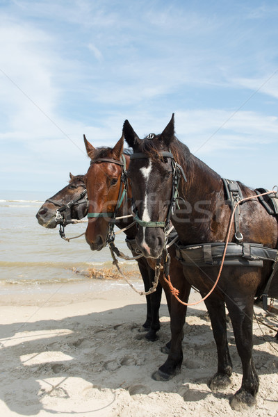 Horses with tilt car at the coast Stock photo © ivonnewierink