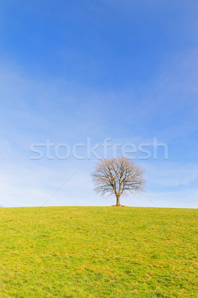 Single tree in winter sun Stock photo © ivonnewierink