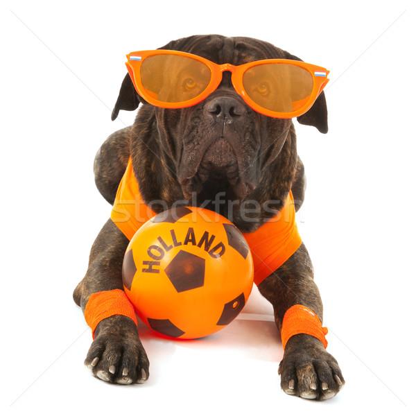 Dog as Dutch soccer supporter Stock photo © ivonnewierink