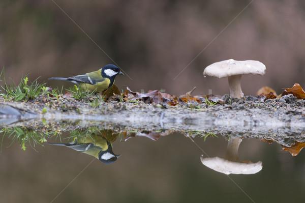 Teta cogumelo venenoso floresta pássaro animal Foto stock © ivonnewierink