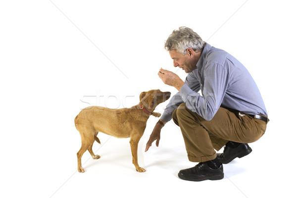 Formación perro obediencia hombre amigos dulces Foto stock © ivonnewierink