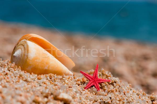 Red starfishes Stock photo © ivonnewierink