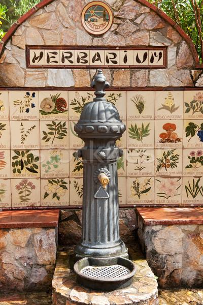 給水栓 美しい 野の花 花 自然 夏 ストックフォト © ivonnewierink