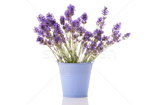 Bouquet Lavandula Stock photo © ivonnewierink