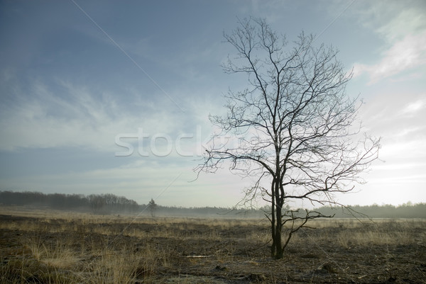 calm landscape in springtime Stock photo © ivonnewierink