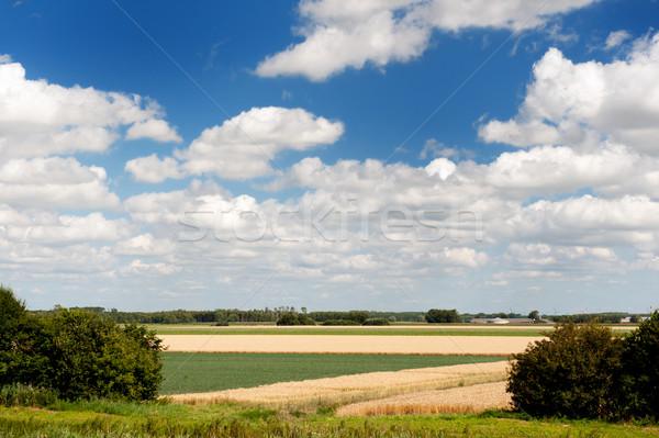 Landscape in Holland Stock photo © ivonnewierink