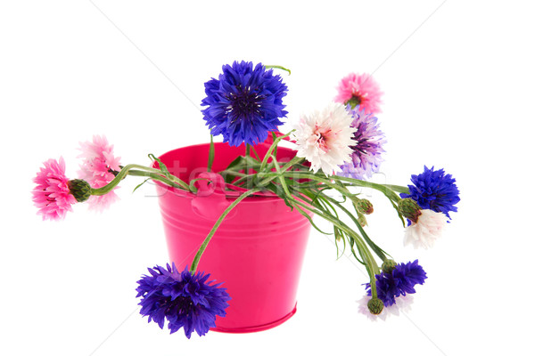 Bucket Cornflowers Stock photo © ivonnewierink