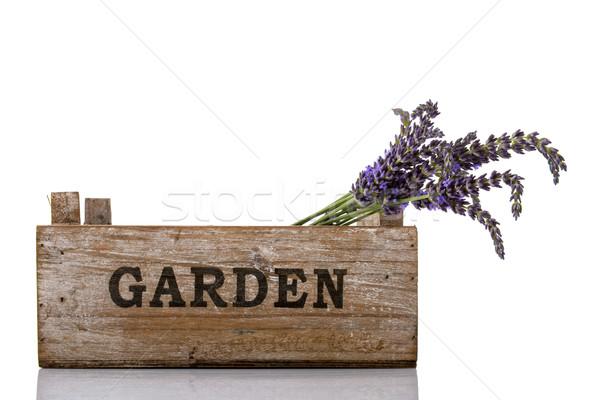 Lawendy skrzynia fioletowy ogród charakter biały Zdjęcia stock © ivonnewierink