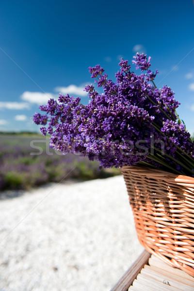 Lavanda campi di lavanda basket fiori Foto d'archivio © ivonnewierink
