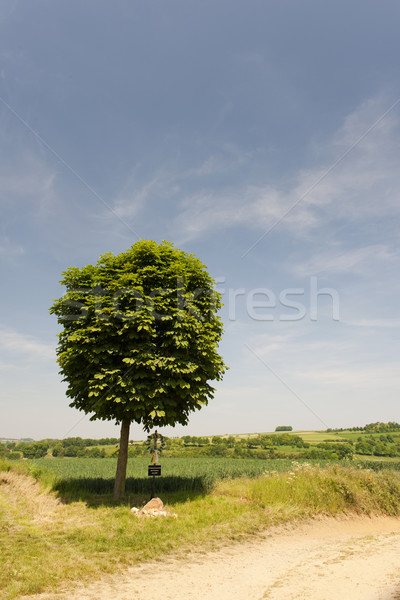 Single tree Stock photo © ivonnewierink