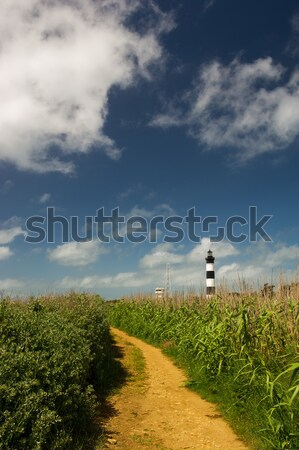 Landscape and lighthouse Island Oleron in France Stock photo © ivonnewierink
