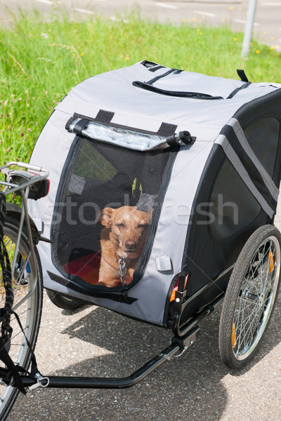 Stock photo: Bike transport for dogs
