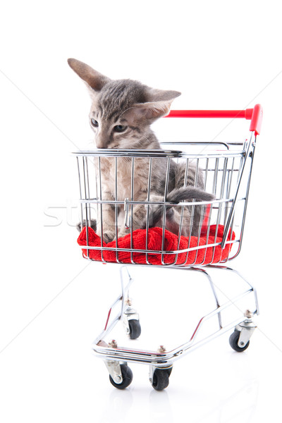 Siamese kitten in shopping cart Stock photo © ivonnewierink