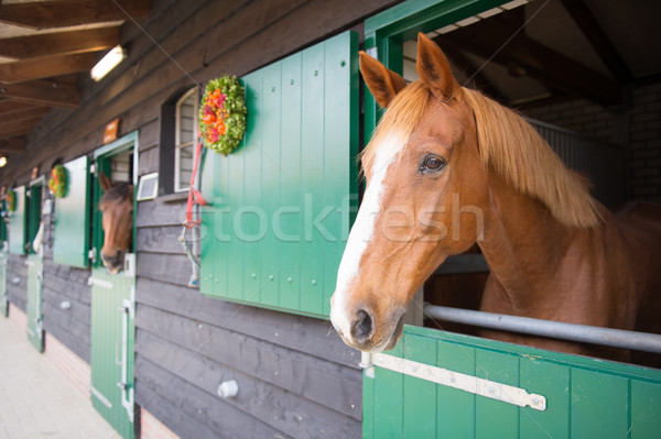 Horses in the stable Stock photo © ivonnewierink