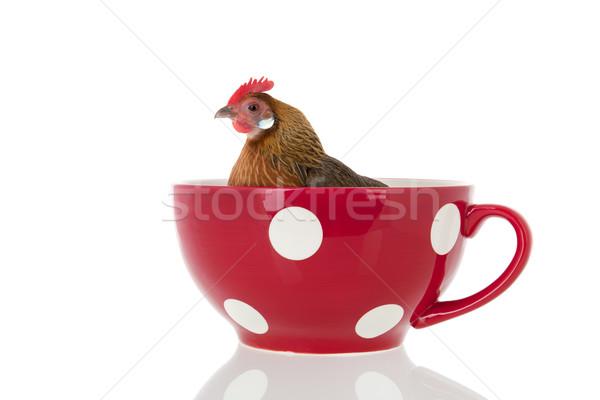 Brodo di pollo pollo grande rosso zuppa Cup Foto d'archivio © ivonnewierink