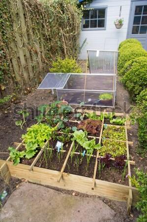 Zöldség kert zöldségek hideg konténer eprek Stock fotó © ivonnewierink