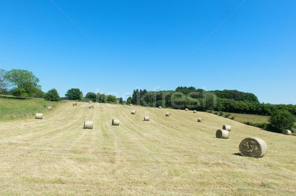 Széna zsemle Franciaország domb természet szépség Stock fotó © ivonnewierink