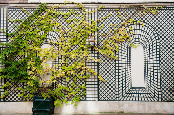 Wall in Paris Stock photo © ivonnewierink