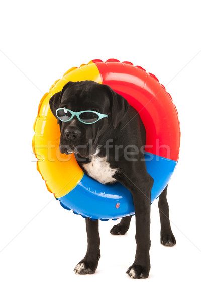 Dog with swimming toy Stock photo © ivonnewierink