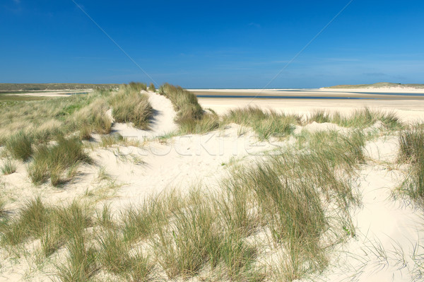 Sand dunes at the coast Stock photo © ivonnewierink