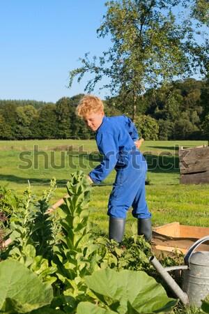Fazenda menino regador vegetal jardim pequeno Foto stock © ivonnewierink