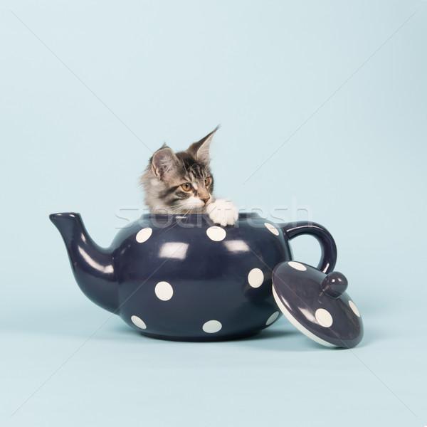 Maine kitten thee pot weinig grappig Stockfoto © ivonnewierink