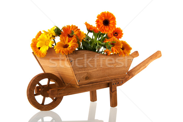 Orange marigolds in wheel barrow Stock photo © ivonnewierink
