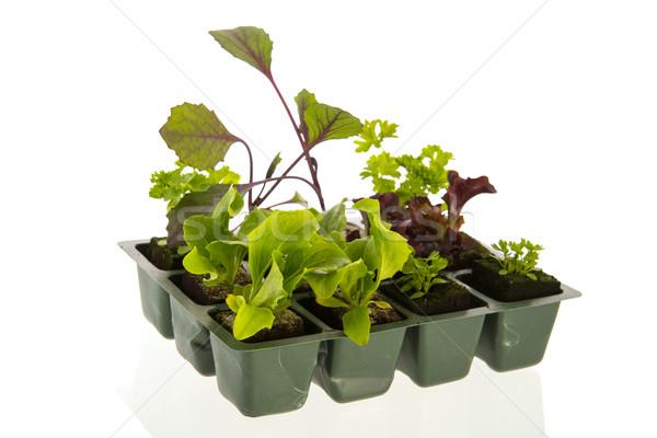 Vegetables and herbs for vegetable garden Stock photo © ivonnewierink