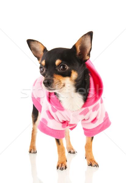 Foto stock: Isolado · branco · em · pé · rosa · suéter · moda
