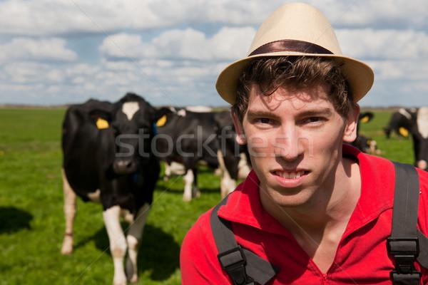 Stok fotoğraf: çiftçi · alan · inekler · genç · manzara · yeşil