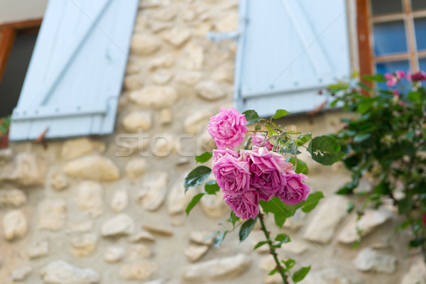 Pink roses in France Stock photo © ivonnewierink
