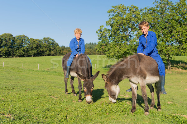 Stock photo: Farm Boys with their donkeys
