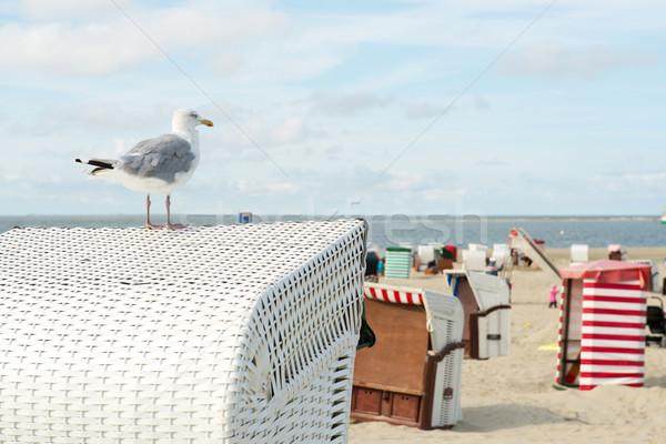 Sea gull at Borkum beach Stock photo © ivonnewierink